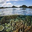 Mario Draghi consulta il mondo ambientalista. Associazioni: Natura deve essere protagonista del PNRR