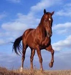 ... e ingegneri dell Università di Pisa ha misurato la sincronizzazione indotta  dalla stimolazione emotiva nell interazione fra esseri umani e cavalli 5b97f1bdd1ac